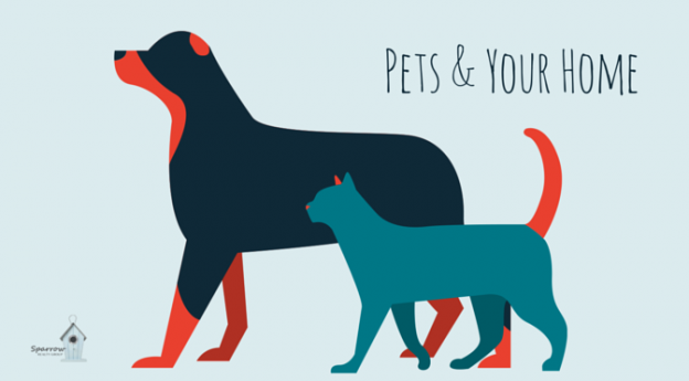 Pets & Your Home - blog (1)